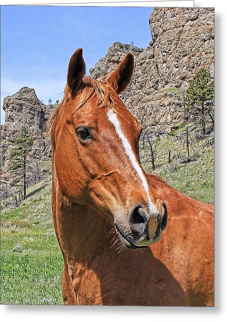 Quarter Horse Greeting Cards - Quarter Horse Portrait Montana Greeting Card by Jennie Marie Schell