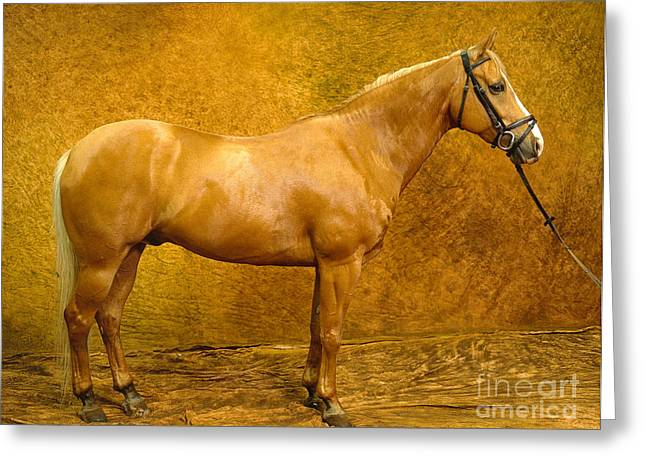 Quarter Horse Greeting Cards - Quarter Horse Greeting Card by Will and Deni McIntyre