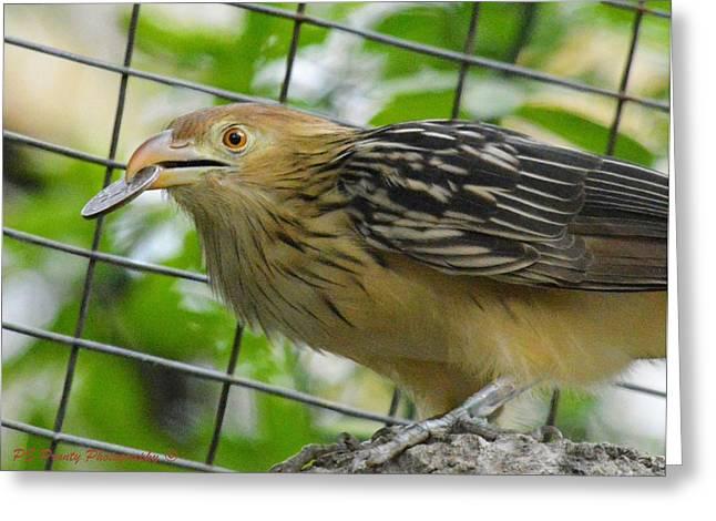 Quarter Of A Birdie Greeting Card by PE Prunty