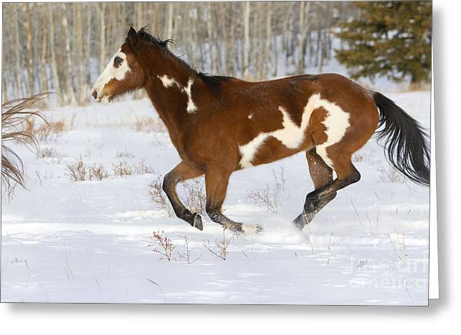 Quarter Horse Greeting Cards - Quarterhorse In Snow Greeting Card by M. Watson