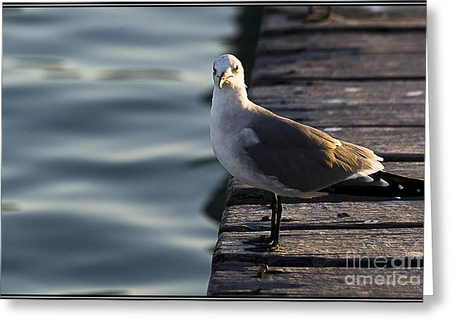 Momento Greeting Cards - Que ves gaviota? Greeting Card by Agus Aldalur