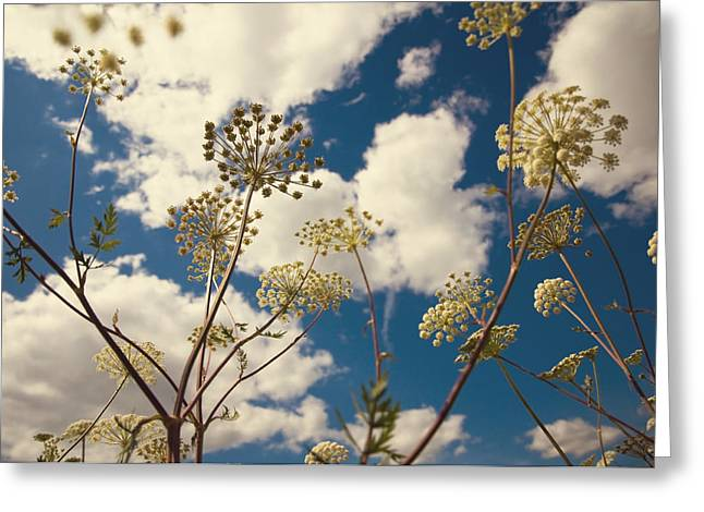 Village Life Greeting Cards - Queen Anne Lace and Sky I Greeting Card by Jenny Rainbow
