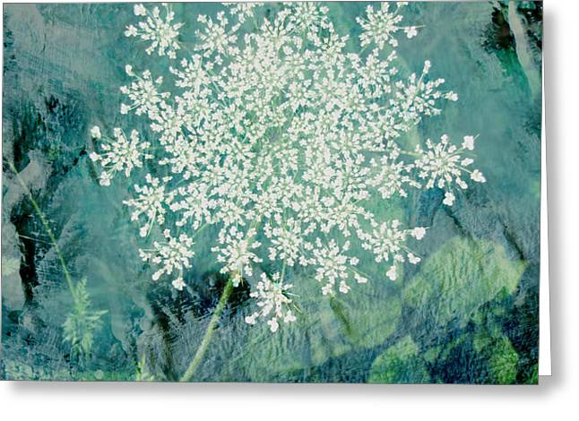 Queen Anne's Lace  Greeting Card by Ann Powell