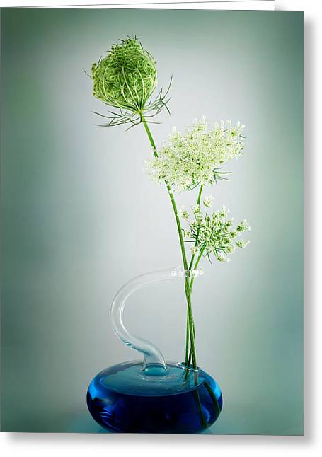 Queen Annes Lace Greeting Cards - Queen Annes Lace Greeting Card by Bill  Wakeley