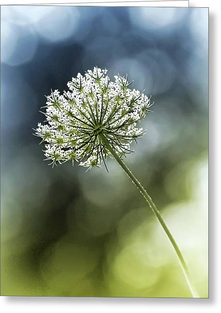 Duo Tone Greeting Cards - Queen Annes Lace Greeting Card by Carolyn Derstine