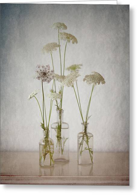 Queen Annes Lace Greeting Cards - Queen Annes Lace End of Summer Greeting Card by Carol Leigh