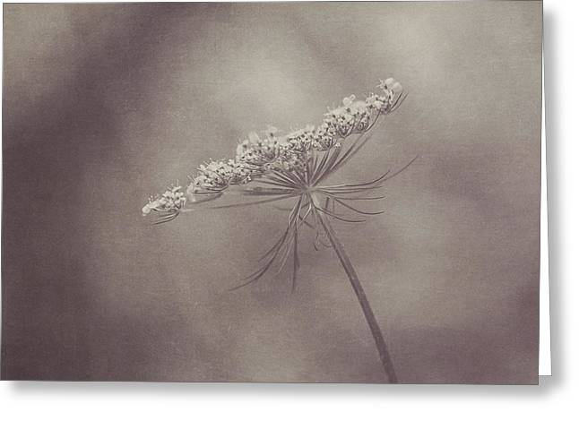 Soft And Subtle Greeting Cards - Queen Annes Lace Greeting Card by Maren Misner