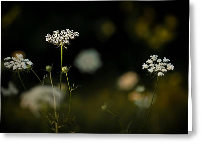 Carota Greeting Cards - Queen Annes Lace Greeting Card by  Onyonet  Photo Studios
