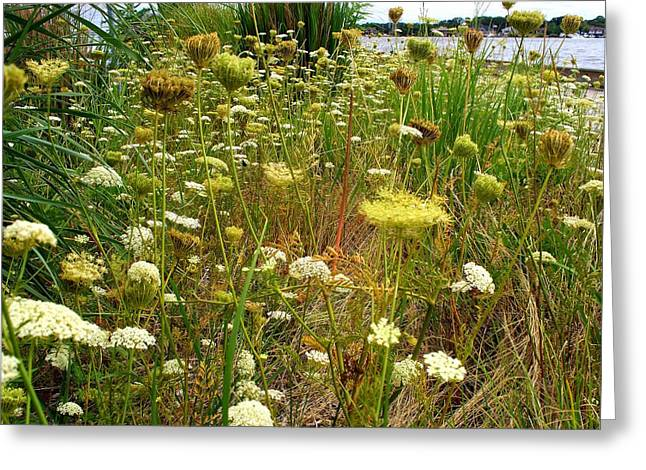 Queen Anne's  Lace Riverfront  Greeting Card by Rick Todaro