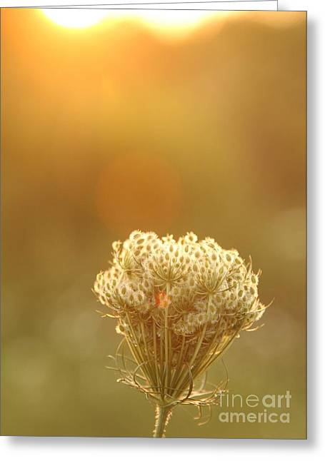 Eve Wheeler Greeting Cards - Queen Annes Lace V-5 Greeting Card by Eve Wheeler