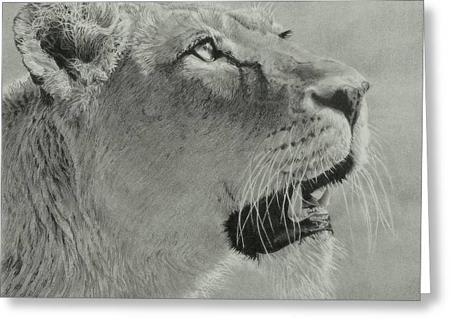 Serengeti Drawing Greeting Cards - Queen B Greeting Card by Kathryn Hansen