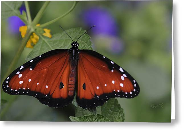 Biology Greeting Cards - Queen Butterfly Greeting Card by Penny Lisowski