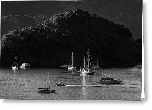 Queen Charlotte Sound Greeting Cards - Queen Charlotte Sound Greeting Card by Nigel Forster