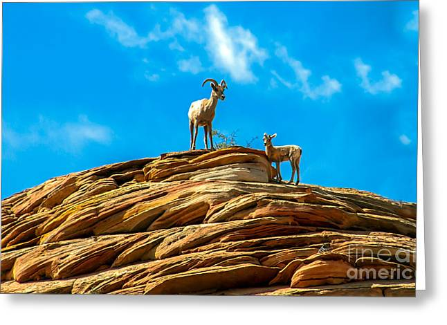 Haybale Greeting Cards - Queen Ewe Greeting Card by Robert Bales
