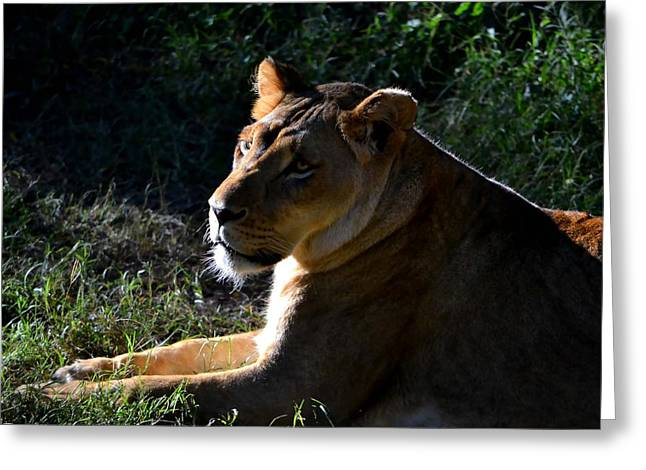 Lions Greeting Cards - Queen Of The Jungle Greeting Card by Deena Stoddard