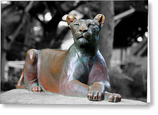 Lions Greeting Cards - Queen Of The Jungle Greeting Card by Scott Hill
