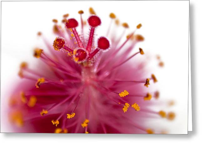 Stamen Digital Greeting Cards - Queens Crown Greeting Card by Camille Lopez