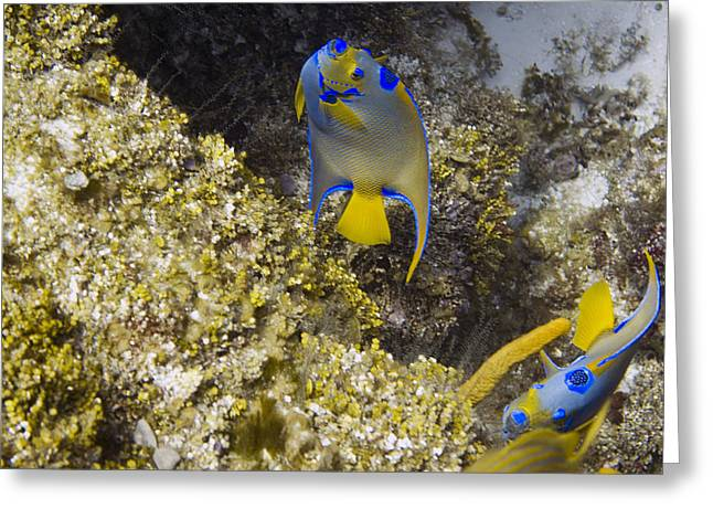Underwater Greeting Cards - Queens Dance Greeting Card by Jim Murphy