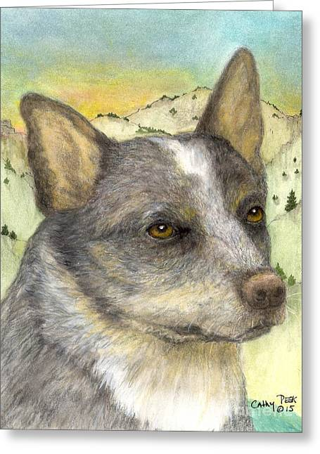 Queensland Blue Heeler Dog Animal Art Greeting Card by Cathy Peek