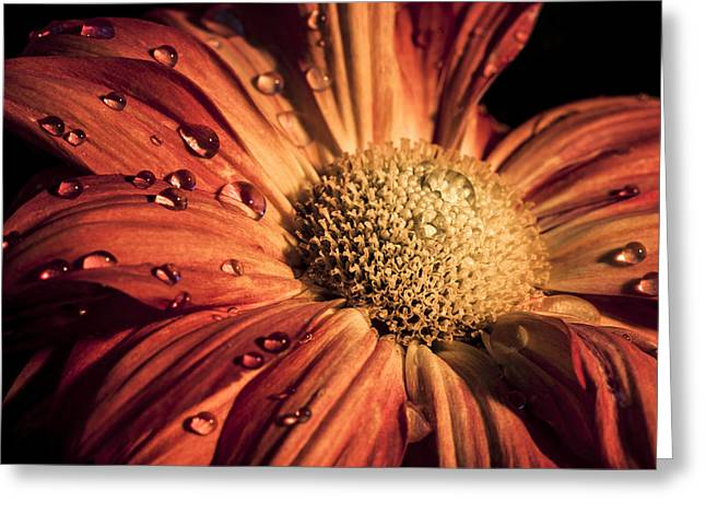Chris Austin Greeting Cards - Quench Greeting Card by Chris Austin