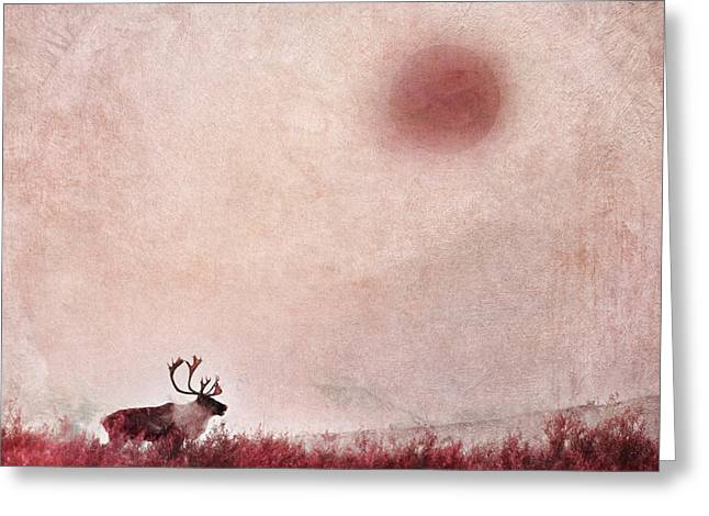 Caribou Greeting Cards - Quest for solitude Greeting Card by Priska Wettstein