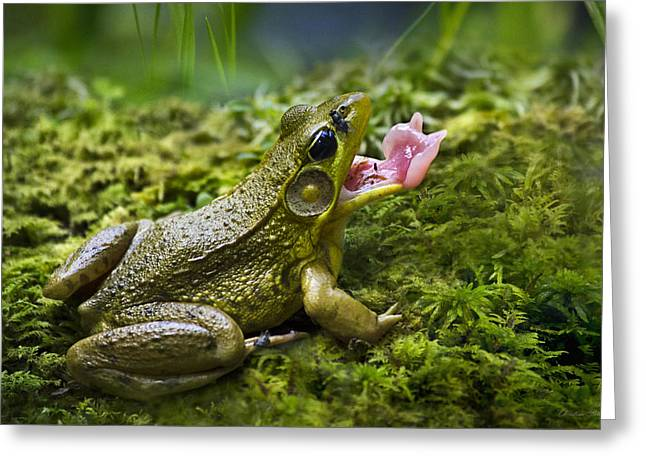 Green Frog Greeting Cards - Quick And Deadly Greeting Card by Christina Rollo