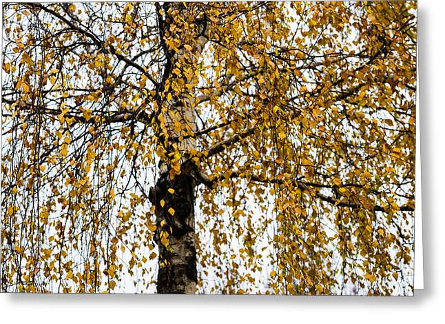 Modesty Greeting Cards - Quiet Charm Of Autumn Greeting Card by Alexander Senin