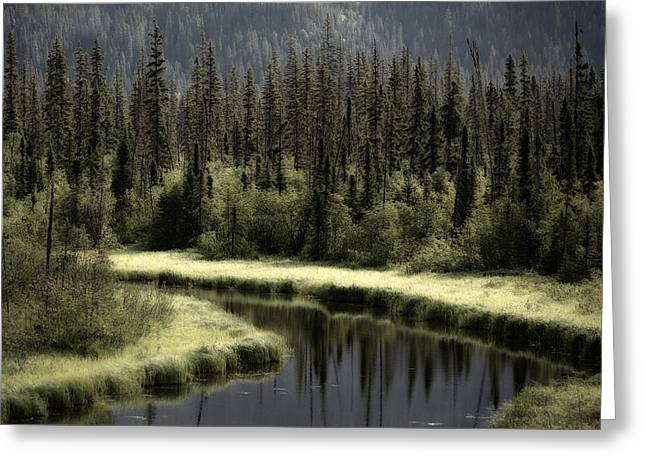 Creative Greeting Cards - Quiet Creek 2 Greeting Card by Gary Migues