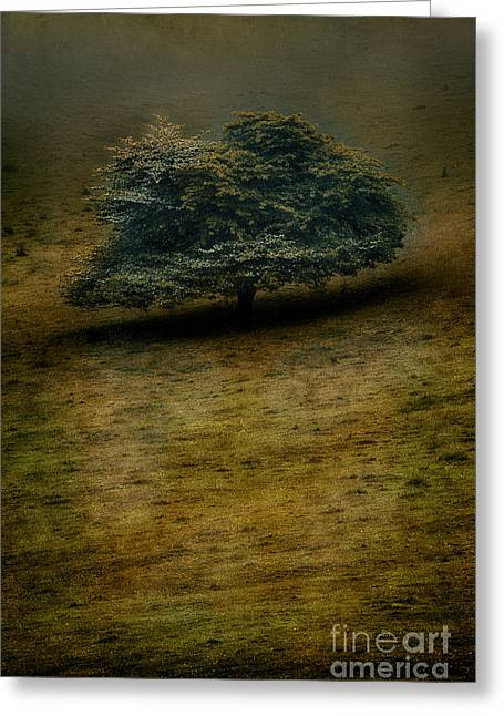 Photographers Mixed Media Greeting Cards - Quiet Lonliness of the Blue Ridge Greeting Card by Dan Carmichael