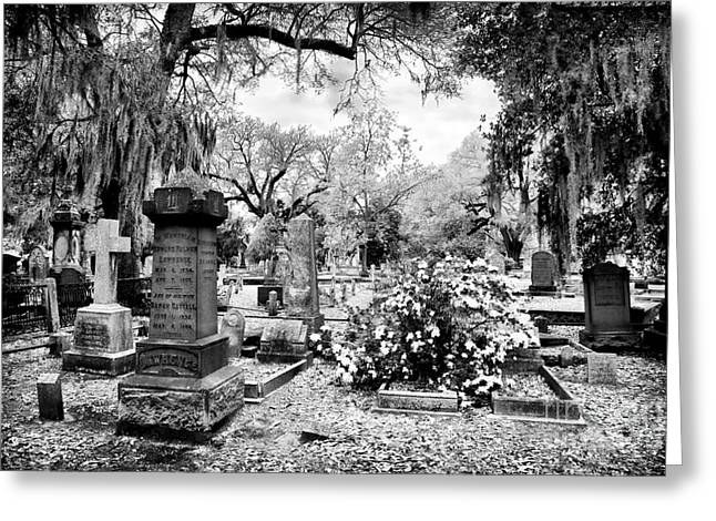 Historic Cemetery Greeting Cards - Quiet Neighbors Greeting Card by John Rizzuto