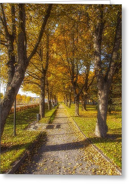 Salo Greeting Cards - Quiet parkway Greeting Card by Veikko Suikkanen