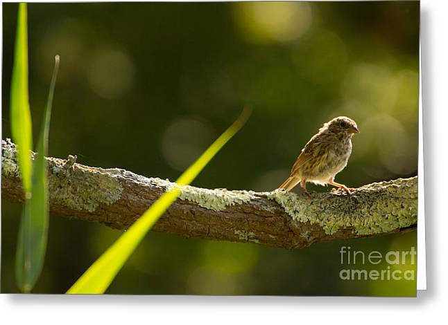 Bird On Tree Greeting Cards - Quiet Time Greeting Card by Heidi Piccerelli