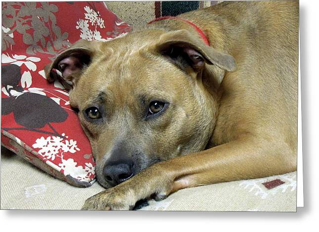 Apbt Greeting Cards - Quiet Time Greeting Card by Renee Trenholm