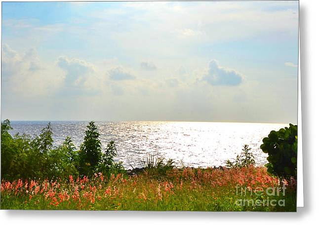 Seacape Greeting Cards - Quietude Greeting Card by Darla Wood