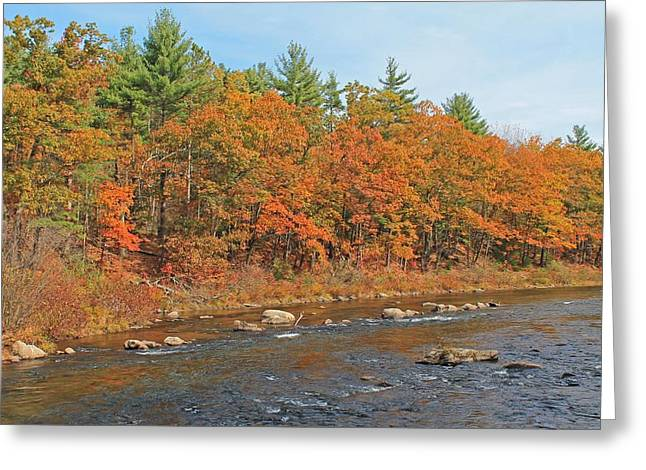 Central Ma Greeting Cards - Quinapoxet River in Autumn Greeting Card by Michael Saunders