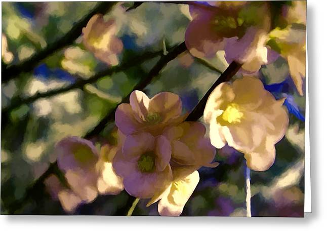 Quince Blossoms Greeting Card by John K Woodruff