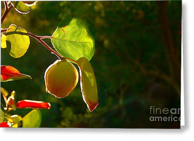 Quince Greeting Cards - Quince Fruit On Tree Greeting Card by Leyla Ismet