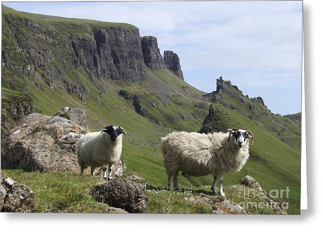 Scottish Blackface Greeting Cards - Quiraing - Isle of Skye Greeting Card by Phil Banks