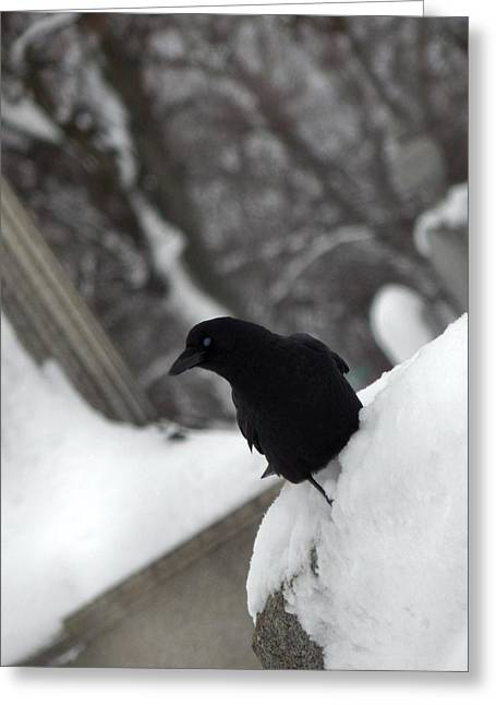 Winter Crows Greeting Cards - Quirky View Greeting Card by Gothicolors Donna Snyder