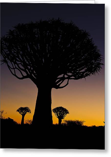 Infertile Greeting Cards - Quiver tree shadows Greeting Card by Andy-Kim Moeller