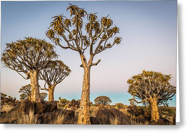 Earth Greeting Cards - Quiver Tree Sunset Greeting Card by Duane Miller
