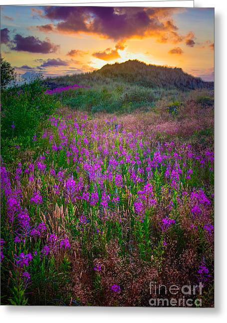 Harmonious Greeting Cards - Raabjerg Fireweeds Greeting Card by Inge Johnsson