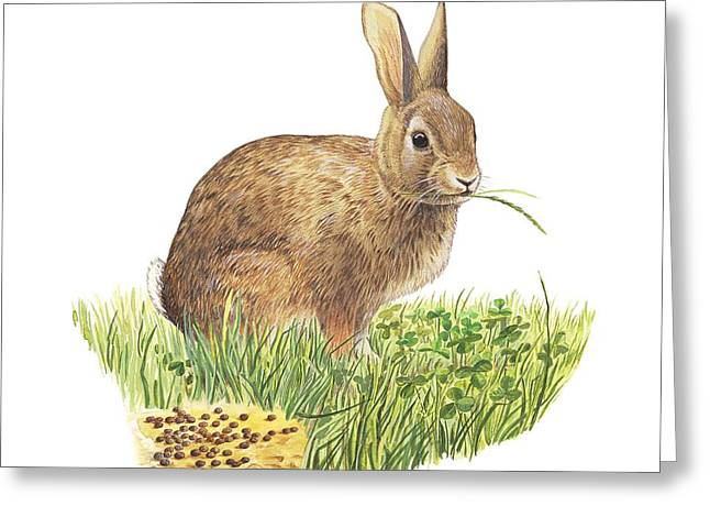 Nitrogen Greeting Cards - Rabbit, artwork Greeting Card by Science Photo Library