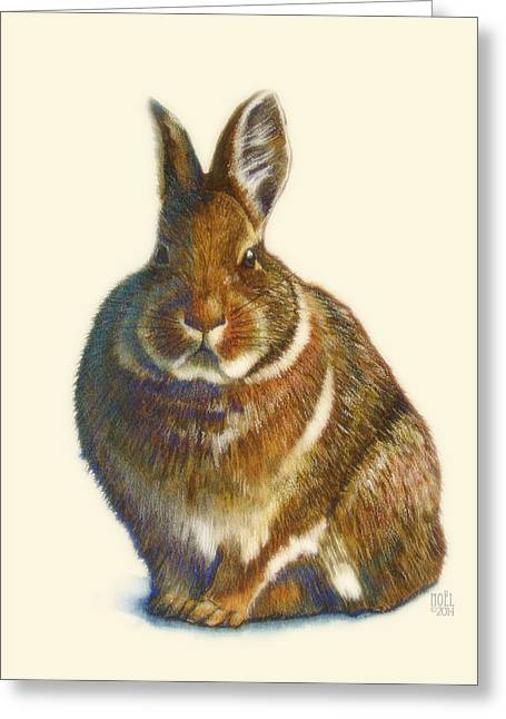 Neutral Colours Greeting Cards - Rabbit Greeting Card by Catherine Noel