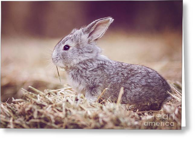 Cute Digital Art Greeting Cards - Rabbit Greeting Card by Diana Kraleva