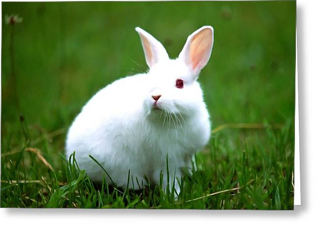 Bunnie Greeting Cards - Rabbit on grass Greeting Card by Lanjee Chee
