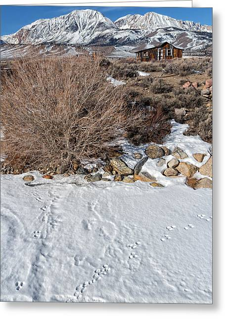Snowy Mountain Loop Greeting Cards - Rabbit Tracks Greeting Card by Kathleen Bishop