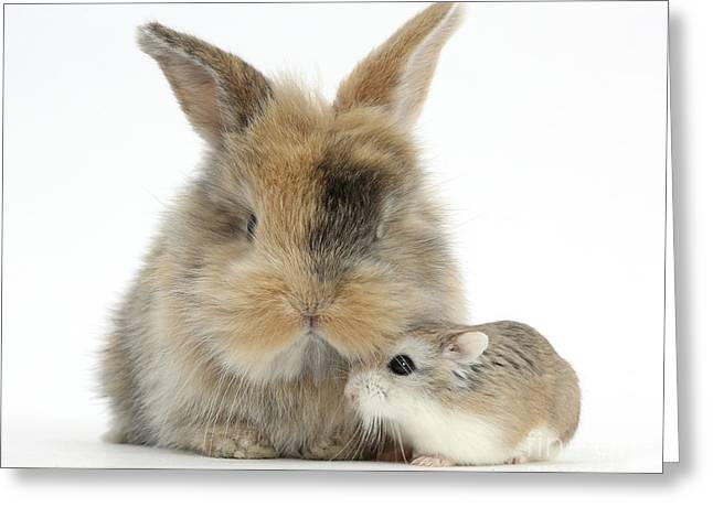 House Pet Greeting Cards - Rabbit With Roborovski Hamster Greeting Card by Mark Taylor
