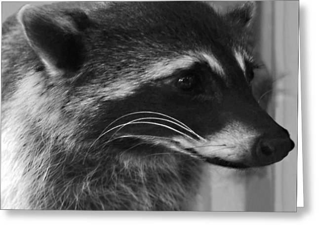 Introvert Greeting Cards - Raccoon 1 Greeting Card by Ellen Henneke