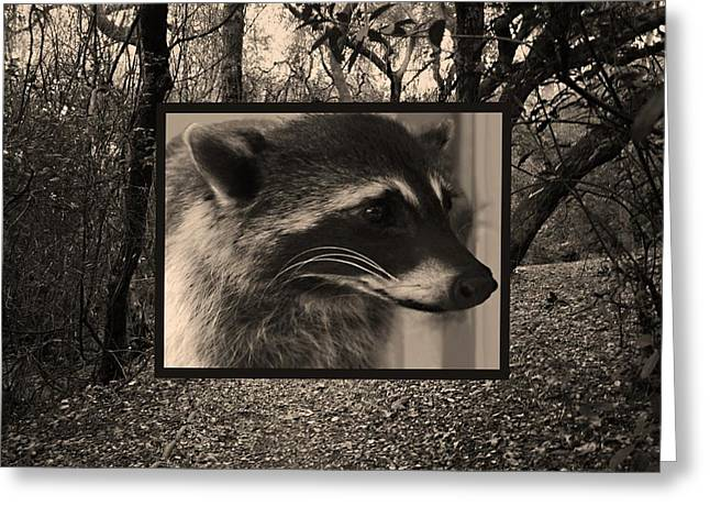 Introvert Greeting Cards - Raccoon 2 Greeting Card by Ellen Henneke